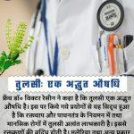 Tulsi holy basil hindi