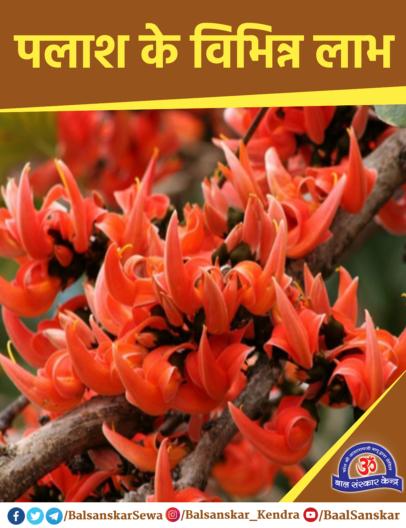 Palash Flowers Tree: Health Benefits, Medicinal uses in Hindi