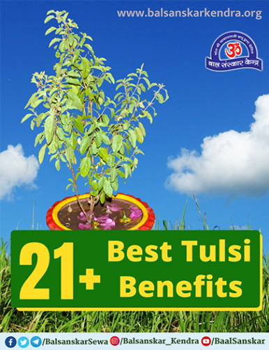 21 Best Tulsi Benefits for physical and mental health