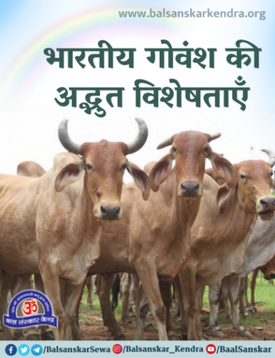 importance of Indian desi cow